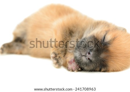 young puppy sleep on white background
