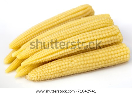 Young small corn closeup view