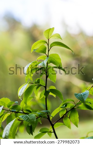 young spring leaves on green background in wet forest