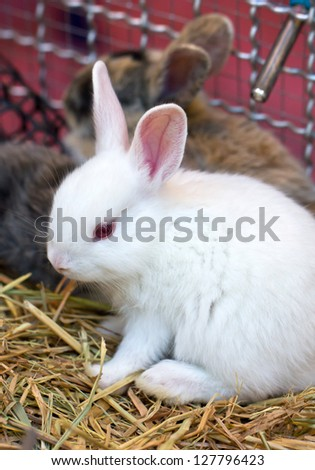 Group Young Rabbits Cage Stock Photo 430905379 Shutterstock