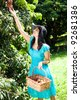 young woman picking litchis in lychee orchard - stock photo