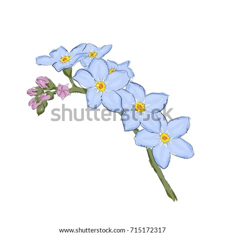 Vector illustration forget me not flower stock vector 634292834 hand draw of flower vector illustration on a white background ccuart Image collections
