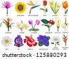 18 Species of colorful flowers - stock vector