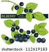 Vector. Bilberries (blueberries) with leaves. - stock photo
