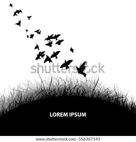 Flock Birds Grass Background Vector 522900382