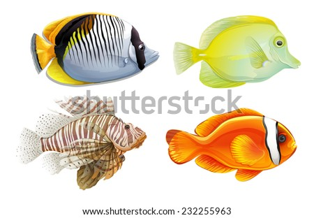 A set of 4 tropical fish