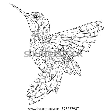 Hummingbird Colibri Coloring Book Adults Vector Stock