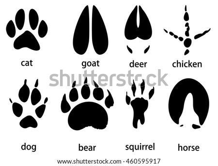 animal tracks vector set