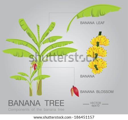 stock vector banana tree 186451157