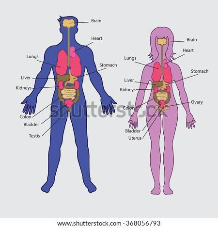 human physiology the basis of medicine pdf