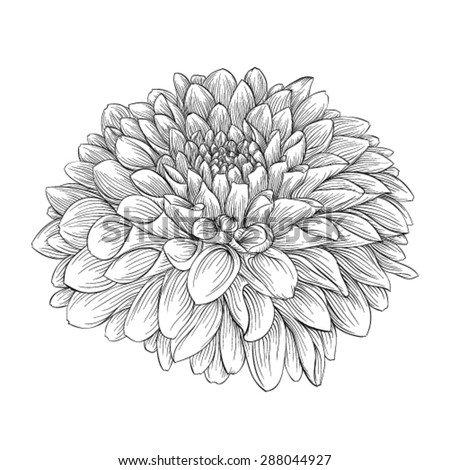 hand drawn chrysanthemum tattoo design stock vector 620559101 shutterstock. Black Bedroom Furniture Sets. Home Design Ideas