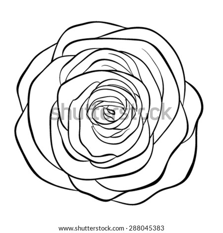 Rose Flower Isolated Outline Hand Drawn Stock Vector 556928335