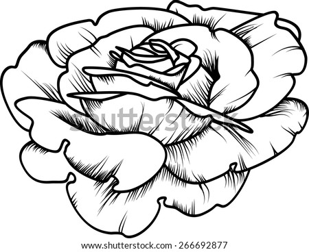 beautiful rose in the style of black and white engraving. vector