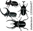 beetle - stock vector