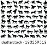Big set of horses silhouettes-vector - stock vector