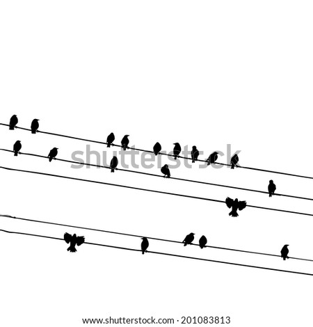 birds on a telephone wire birds on a wire cartoon wiring