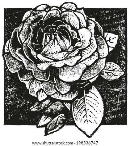 black and white vector design of rose on non-meaningful �´Lorem Ipsum�´ script background