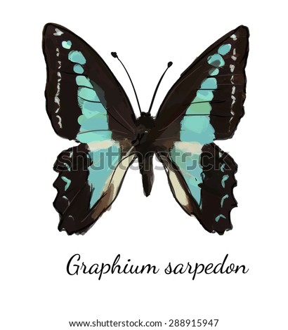 Blue butterfly ulysses Mountain Swallowtail illustration vector