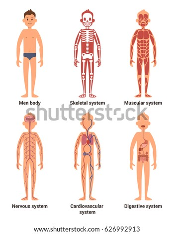 vector muscular human body muscle man stock vector 266478386, Muscles