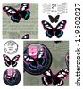 Bold Butterfly Seamless Vector Patterns and Elements. Use as fills, backgrounds or print onto fabric for home furnishings. - stock vector