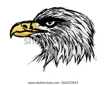 bold eagle, illustration of wildlife, bird, zoo, symbol of USA