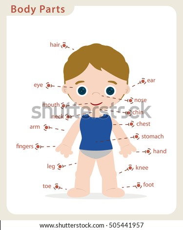 boy body parts diagram poster