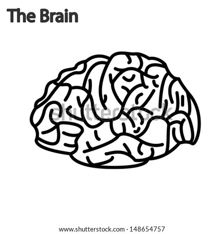 brain function illustration