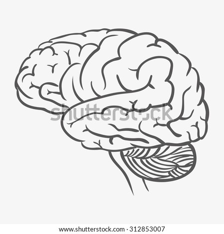 brain function diagram stock vector 156466463 shutterstock. Black Bedroom Furniture Sets. Home Design Ideas