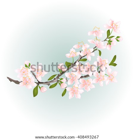 Branch cherry  pink  flowers with leaves vector illustration