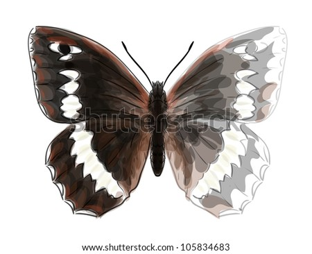 Butterfly Brintesia Circe. Unfinished Watercolor drawing imitation. Vector illustration.