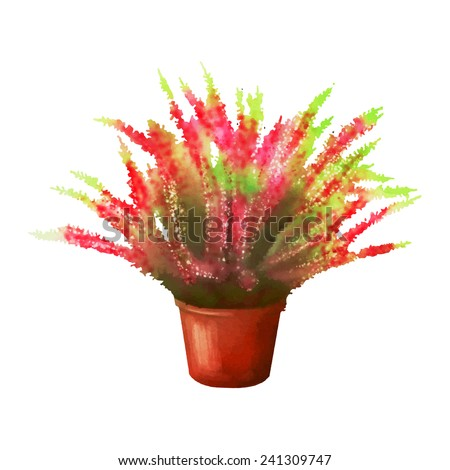 Calluna. Flower in a pot on a white background. Vector illustration.