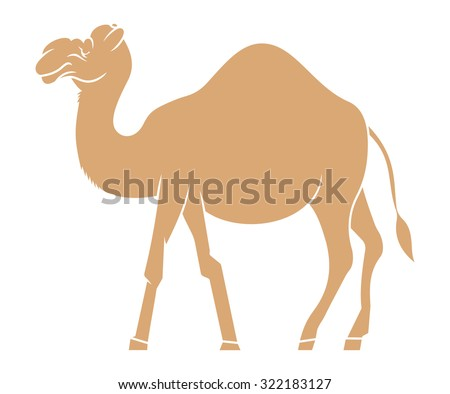 Camel vector illustration