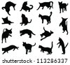 Cats silhouette,vector - stock vector