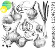 Collection of hand drawn illustrations with garlic's isolated on white background - stock vector