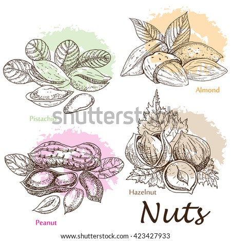 Collection of nuts.