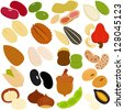 Colorful and Cute vector Icons collection. A set of Beans, Nuts, Seeds isolated on white - red green beans, peanut, pumpkin seed, macadamia, pistachio, cashew nut, walnut, etc - stock vector