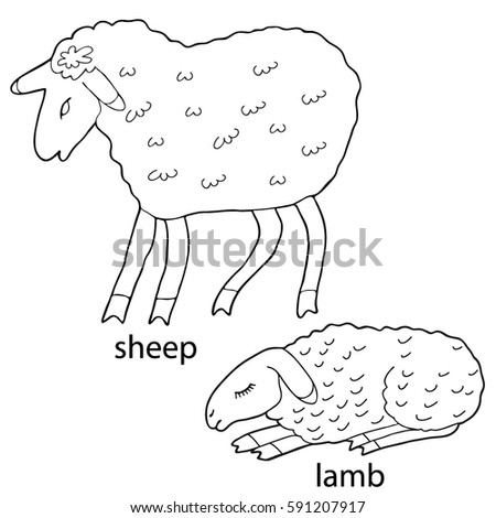 sleeping sheep coloring pages - photo#6