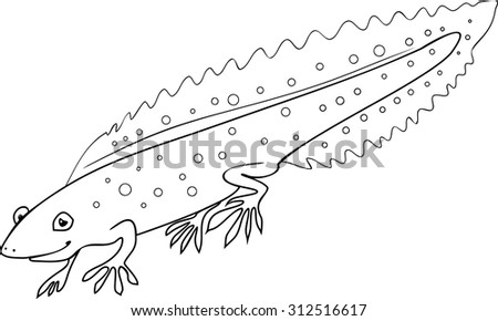 Woodpecker piculets wrynecks sapsuckers vintage engraved for Newt coloring page