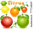 complete set citrus fruit on a white background - stock vector