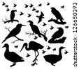 composition birds silhouettes - stock vector