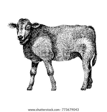 Hand Drawn Illustration Of Beautiful Black And White Animal Line Art Drawing In