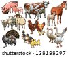 Culture pets and animals living on the farm and raised by humans, birds, farm, chicken, cow, pig, horse, sheep, turkey, goose, duck, foal, calf, lamb, piglet - stock