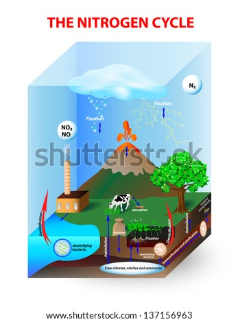 Ecosystem Stock Photos  Images    Pictures   Shutterstock