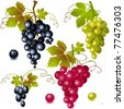 different varieties of grapes with leaves on white background - stock vector