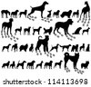 Dog collection - vector silhouette - stock vector