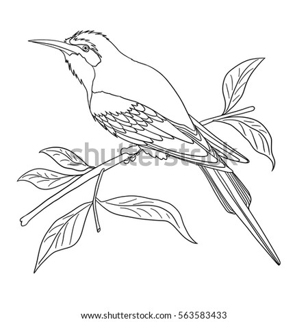 Doodle Coloring Book For Adult With Bird On The Branch