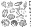 Doodle vector illustration of varieties of cabbage. Sketch collection of fresh vegetables isolated on white background. - stock vector