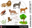 easy to edit vector illustration of food web - stock