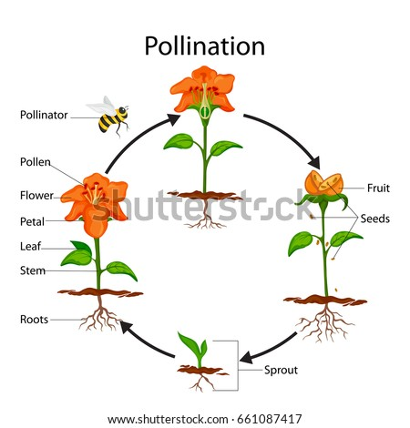 a study of the importance of bees In a study that shows the importance of climate change on critical pollinators,  north carolina state university researchers found that earlier and.