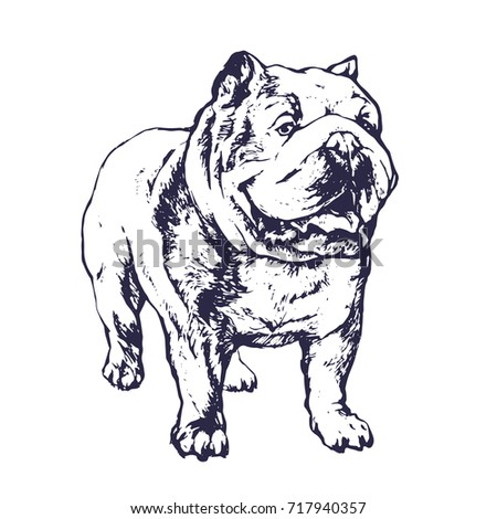 English Bulldog Animal Dog Portrait Hand Drawn Ink Tattoo Sketch Stock Vector Illustration Outline On White